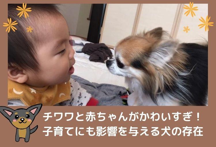 チワワと人間の赤ちゃんがかわいすぎ!子育てにも影響を与える犬の存在