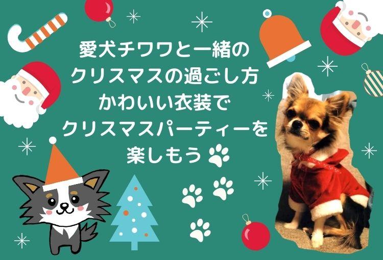 愛犬チワワと一緒のクリスマスの過ごし方。かわいい衣装でクリスマスパーティーをしよう!